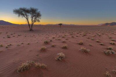 Dry grass in red sand Namib Desert