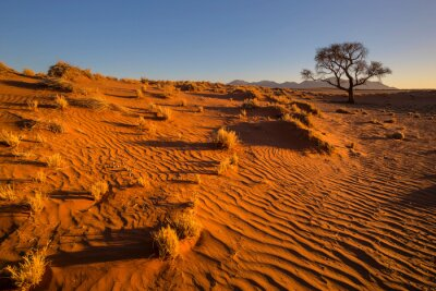 Dry grass on wind swept dune in the desert