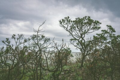 Dry trees in a overcast day inside the Serra da Canastra National Park in Brazil