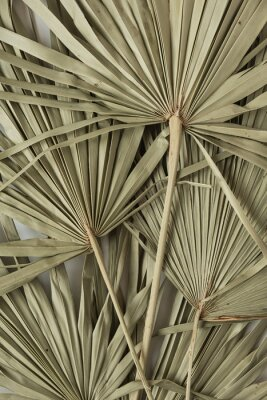 Póster Dry tropical exotic palm leaves on white background. Flat lay, top view minimalist floral pattern aesthetic composition.