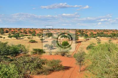El desierto de Kalahari, Namibia