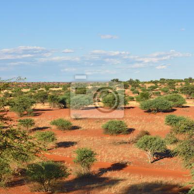 El desierto del Kalahari, Namibia