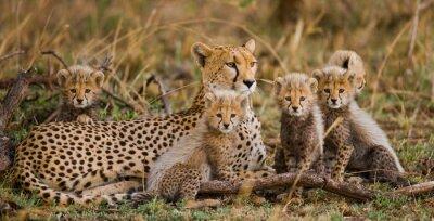 El guepardo hembra con sus cachorros