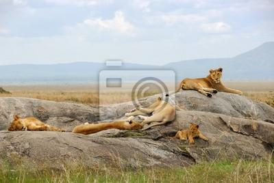 El orgullo de los leones