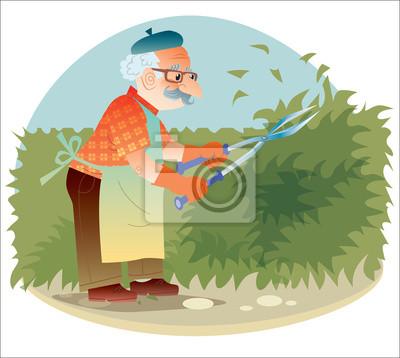El viejo jardinero que trabaja en el jardín cortando los arbustos