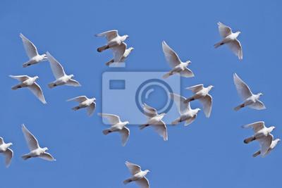 El Volar Palomas Blancas Carteles Para La Pared Pósters Bautizar