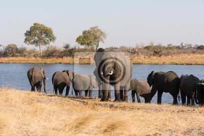 Elefante adulto monta guardia frente al río