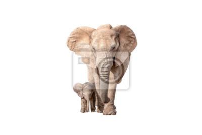 Elefante becerro junto a su madre aislado en blanco