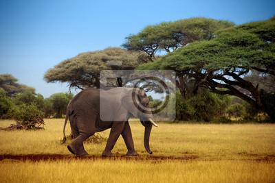 elefante caminando por la sabana en el Masai Mara