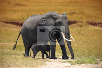 Elefante con un pequeño bebé en Amboseli