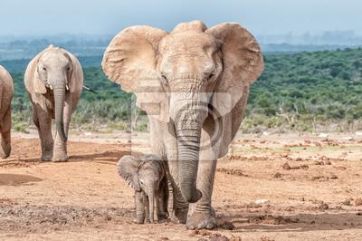 Elefante de ternera caminando junto a su madre