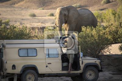 Elefante del desierto cerca de Purros, Namibia.