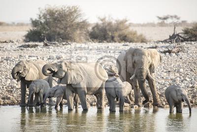 Elefante en el agujero de agua de Okaukuejo.