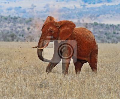 Elefante en el parque de Tsavo