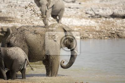 Elefante en el Parque Nacional de Etosha.