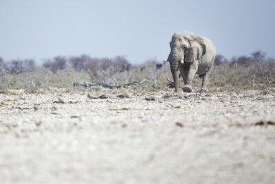 Elefante en el Parque Nacional de Etosha