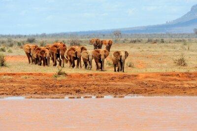 Póster Elefante en el Parque Nacional de Kenia