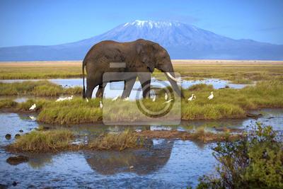Elefante en la piscina en el fondo del Kilimanjaro
