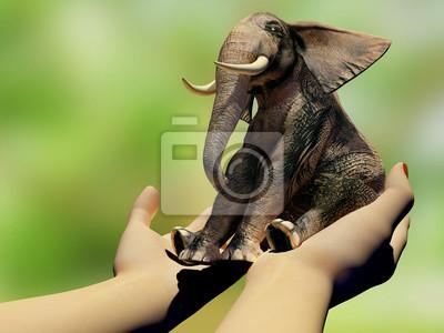 Elefante en las manos.