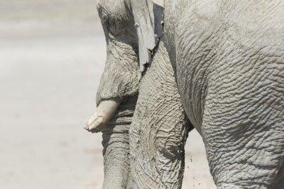 Elefante grande bulli en el Parque Nacional de Etosha.