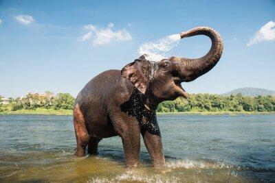 Póster Elefante lavado en el río