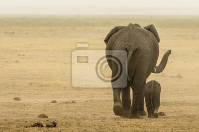 Elefante mamma e figlio