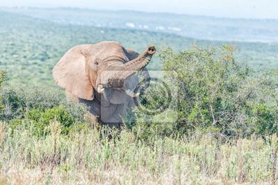 Elefante mirando hacia la cámara