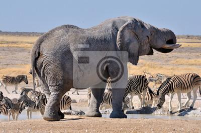 Elefante, Parque Nacional de Etosha, Namibia