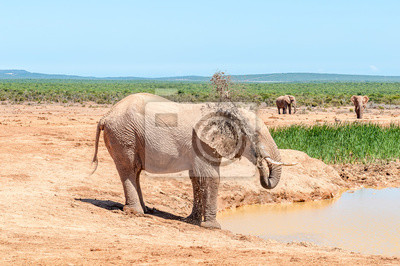 Elefante, rociado, sí mismo, fangoso, agua