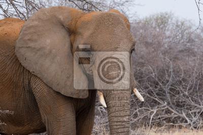 Elefante sucio con polvo rojo