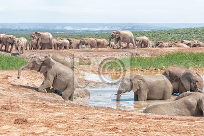 Elefante tratando de salir del pozo de agua