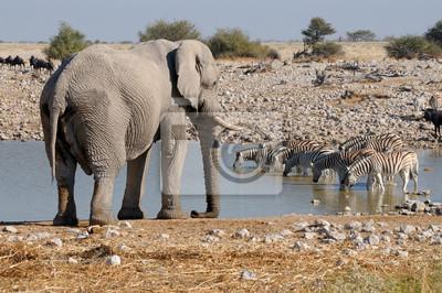 Elefante y cebras