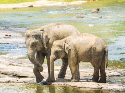 Póster Elefantes