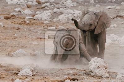 Elefantes bebés jugando en tierra