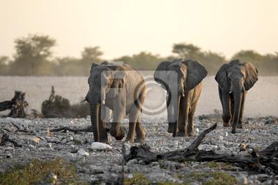 Elefantes caminando en una fila.