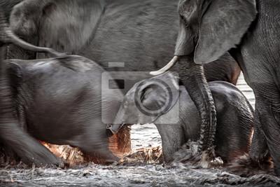 Elefantes corriendo por el agua