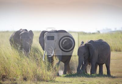 Elefantes de la familia en la sabana africana en las luces polvorientas brumosas