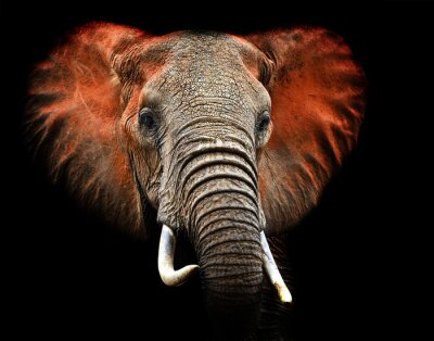 Elefantes de Tsavo