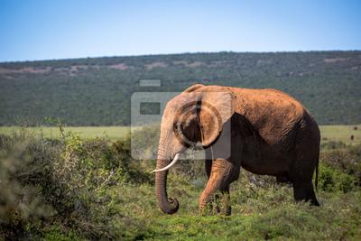 Elefantes en el Parque Nacional Addo en Sudáfrica
