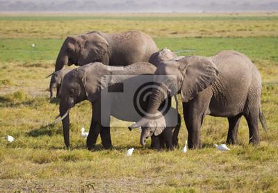 Elefantes familiares en el Parque Nacional Amboseli Kenia