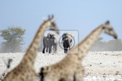 Elefantes marchando hacia un agujero de agua.
