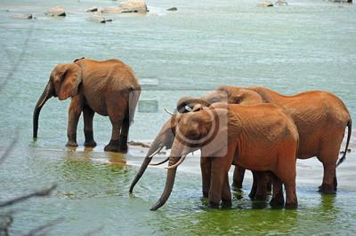 Elefantes por el río