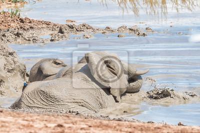 Elefantes que juegan en un waterhole