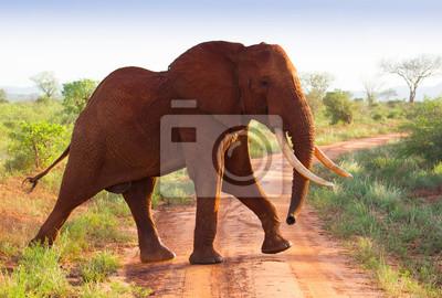 Elefantes rojos en la sabana africana en Kenia