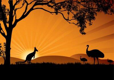 Póster Emu kangaroo puesta de sol