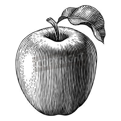 Póster Engraved illustration of an apple  Vector