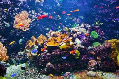 Póster Escena bajo el agua con los peces, los arrecifes de coral