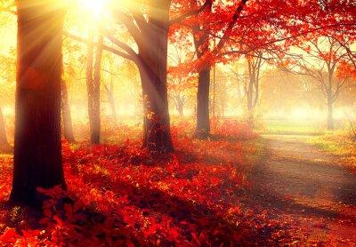 Póster Escena de la caída. Parque otoñal hermosa en la luz del sol