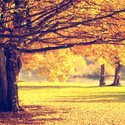 Póster Escena de otoño borrosa