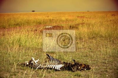 Esqueleto en la sabana. Mara Masasi.
